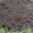 Доставка чернозема валом #946587