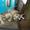 Делительная головка УДГН-160 ( УДГ 320) #1199200