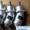 Гидромотор, Гидронасос серии 310.2.28 #1483247
