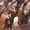 Куры породы Хайсекс-Браун. Яйценоские. #1501171