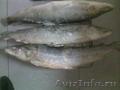 Предлагаю  мороженую рыбу НЕЛЬМУ от 5 кг.