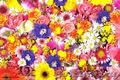 Самый большой выбор цветов по САМЫМ НИЗКИМ ценам