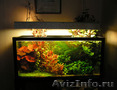Изготовление,  оформление и обслуживание эксклюзивных аквариумов. Качество и гара
