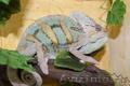Продаю нильских крокодилов и кайманов. Нижний Новгород
