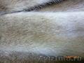 Пошив шубы из меха норки. (мех не Китайский) - Изображение #4, Объявление #738508