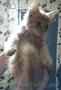 Подарю рыженького котенка (девочку)