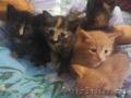 В дар милые домашние котята  1.5 мес.